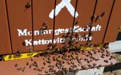 Przyleciały pilskie pszczoły!